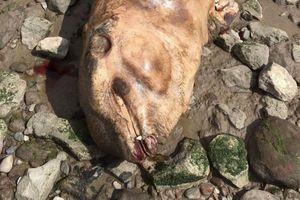 Bí ẩn 'quái vật tiền sử' mình đầy gai nhọn xuất hiện trên bờ sông ở Anh