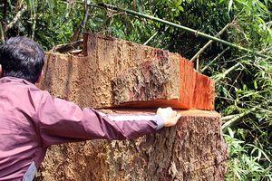 Cách chức Giám đốc Ban Quản lý rừng phòng hộ Nam Sông Bung