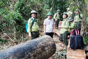 Quảng Nam: Cách chức, kỷ luật nhiều cán bộ kiểm lâm
