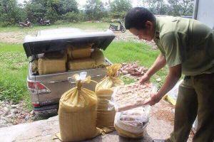 Quảng Ninh: Phát hiện hơn 1 tấn nội tạng không rõ nguồn gốc