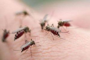 TP. HCM: Đã có 3.000 ca sốt xuất huyết nhập viện trong 4 tháng đầu năm 2018