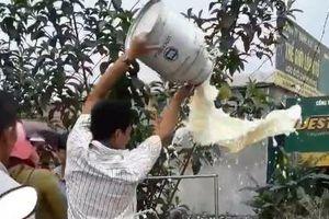 Nông dân đổ sữa tại trạm trung chuyển sữa tươi Vinamilk