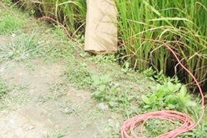 Thiếu niên 15 tuổi chết thảm vì dính bẫy điện diệt chuột