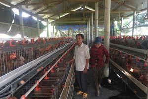 Người nuôi gà siêu trứng và bò BBB thu tiền tỷ mỗi năm