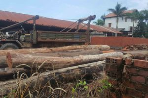 Vụ bắt gỗ lậu của Phượng 'râu': Tạm đình chỉ Trạm phó Trạm quản lý bảo vệ rừng số 1