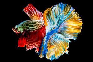 Vẻ đẹp loài cá
