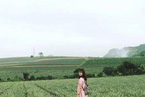 Sống ảo trên cánh đồng dứa xanh mướt mắt tại Cố đô Hoa Lư
