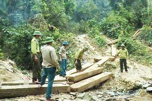 Quảng Bình: Kỷ luật 5 cán bộ kiểm lâm để rừng bị phá