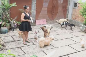 Cô gái 9x 'làm bảo mẫu' của hàng trăm con chó mèo