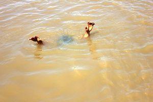 Cứu bạn rơi xuống hồ, 4 học sinh chết đuối