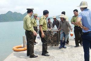 Tái thả hàng chục cá thể các loài khỉ, rắn về môi trường tự nhiên