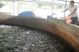 Nhiều cơ sở thủy sản vi phạm bất hợp tác