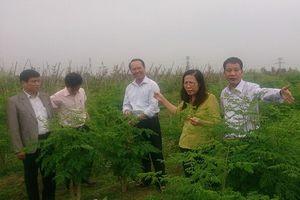 Hội Nông dân huyện Sóc Sơn: Trợ lực giúp hội viên thoát nghèo