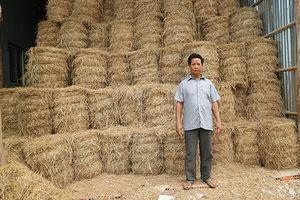 Lão nông Khmer thu nhập tiền tỷ từ kinh doanh rơm