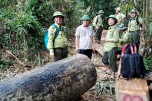 Nhiều cán bộ kiểm lâm Quảng Nam xin nghỉ việc do áp lực công việc