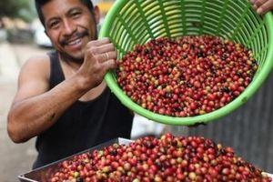 Giá nông sản hôm nay 14/5: Giá cà phê ì ạch tăng trở lại, giá tiêu khó đi lên trong năm nay