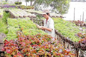 Nông thôn mới ở làng hoa kiểng
