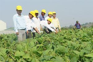 Ninh Thuận: Ngừng sạ 6.438ha lúa hè thu