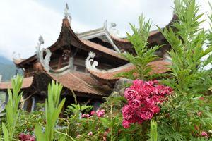 Ngất ngây sắc hồng cổ chân núi Fansipan