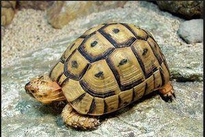 Cứu hộ thành công 191 cá thể rùa quý hiếm