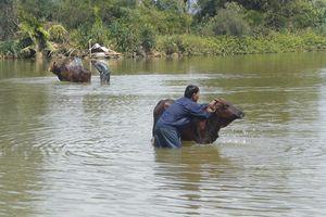 Rủ nhau đi tắm sông, 2 học sinh ở Quảng Ngãi đuối nước thương tâm