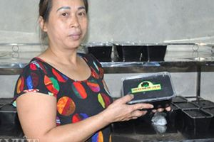 'Cây trăm tỷ' mang nấu thạch, cô Bạch bỏ túi 30 triệu đồng/tháng
