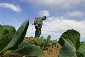 Quyết tâm làm sạch đất nhiễm độc trừ sâu của Trung Quốc 'dậm chân tại chỗ'