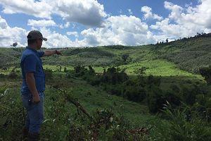 Sai phạm trong sử dụng đất rừng, Chủ tịch và Bí thư huyện bị kỷ luật