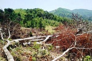 Để mất rừng, nhiều cán bộ ở Bình Định bị kiểm điểm