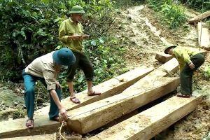 Quảng Bình: Kỷ luật Phó Chủ tịch huyện để xảy ra phá rừng