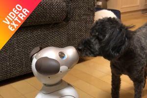 Những khoảnh khắc robot còn 'lầy' hơn con người
