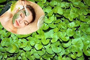 Cách làm mặt nạ trị mụn từ rau má hiệu quả hơn mỹ phẩm