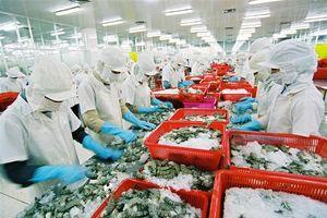 Khắc phục thẻ vàng, xuất khẩu tôm sang EU vẫn tăng trưởng tốt