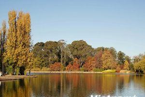 Đắm chìm trong mùa Thu quyến rũ ở Canberra