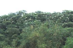 25 năm nỗ lực bảo vệ rừng cò
