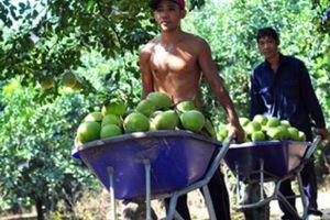 Tour du lịch trên sông Đồng Nai: Đánh thức vùng đặc sản nông nghiệp