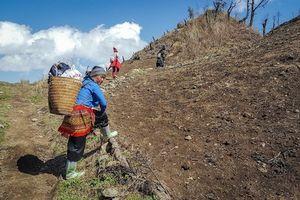 Những người Mông dẫn đường: Ấm áp du lịch đi lên từ bản