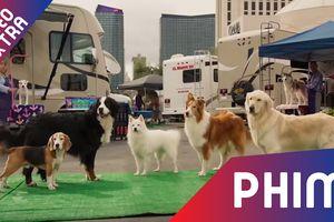 Biệt đội cún cưng xuất hiện trong trailer phim 'Show dogs'
