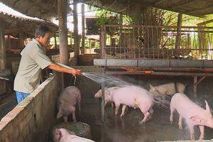 Không có chuyện lợn Trung Quốc nhập khẩu ngược về Việt Nam