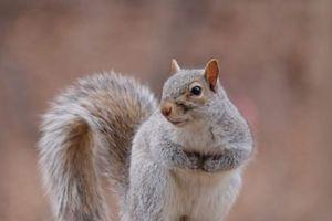 Top 10 loài động vật có vú mang thai ngắn nhất