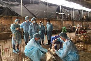 Kinh nghiệm nâng tỷ lệ tiêm phòng cho gia súc, gia cầm