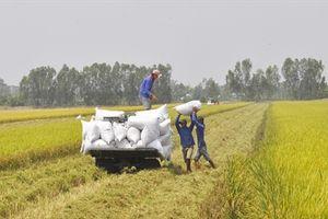 VnSAT Cần Thơ giúp nông dân tăng lợi nhuận