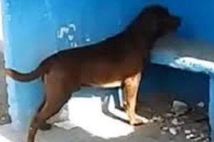 Chú chó cả ngày chỉ ngồi nhìn bức tường xanh