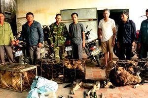 Triệt phá đường dây trộm chó ở Hà Tĩnh, tạm giữ 6 'cẩu tặc'