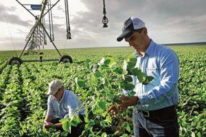 Bayer sớm hoàn tất giao dịch mua lại Monsanto