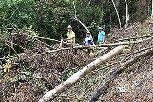 Phó Thủ tướng yêu cầu xử lý nghiêm vụ phá rừng ở Bắc Kạn