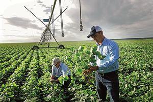 Bayer sắp hoàn tất thương vụ mua lại Monsanto