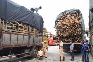 Tạm giữ 4 xe chở gỗ tràm quá khổ, tài xế không có GPLX