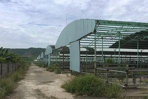 Trại chăn nuôi bò lớn nhất miền Trung, từng được đầu tư 5.000 tỉ, tan hoang sau 3 năm