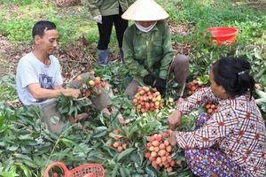 Tạo mọi điều kiện để Bắc Giang thu hoạch, tiêu thụ vải thiều
